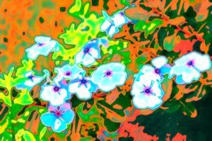 flores rosas gauss psicodelicas.jpg