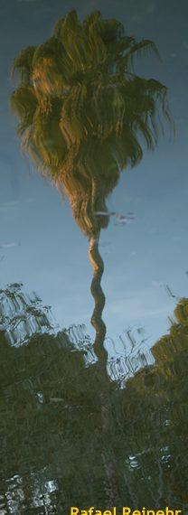 Árvore refletida