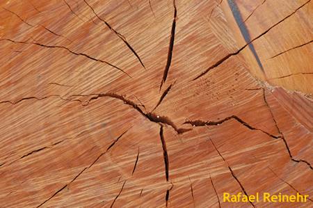 Textura de tronco