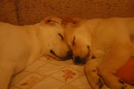 Bhali e Sancho