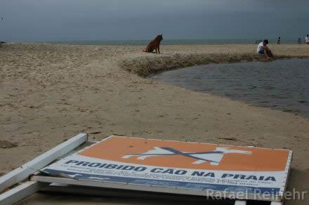 Proibido cão na praia