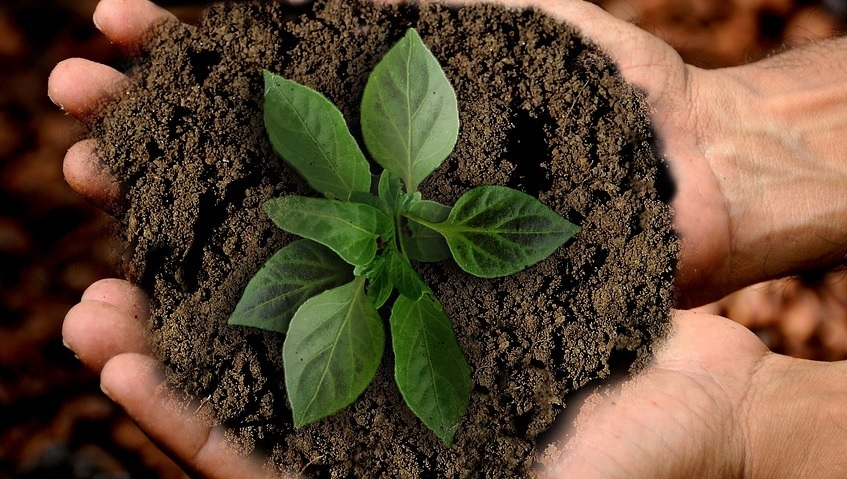 Desafio por um Mundo mais Verde e Solidário