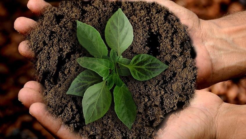 Coolmeia e sustentabilidade