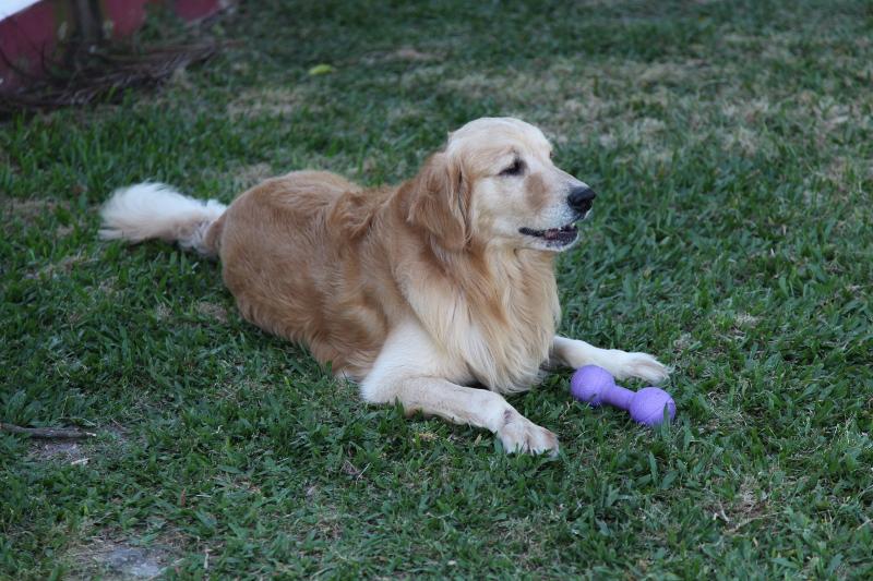 Sancho, a vida e ida de um cão.